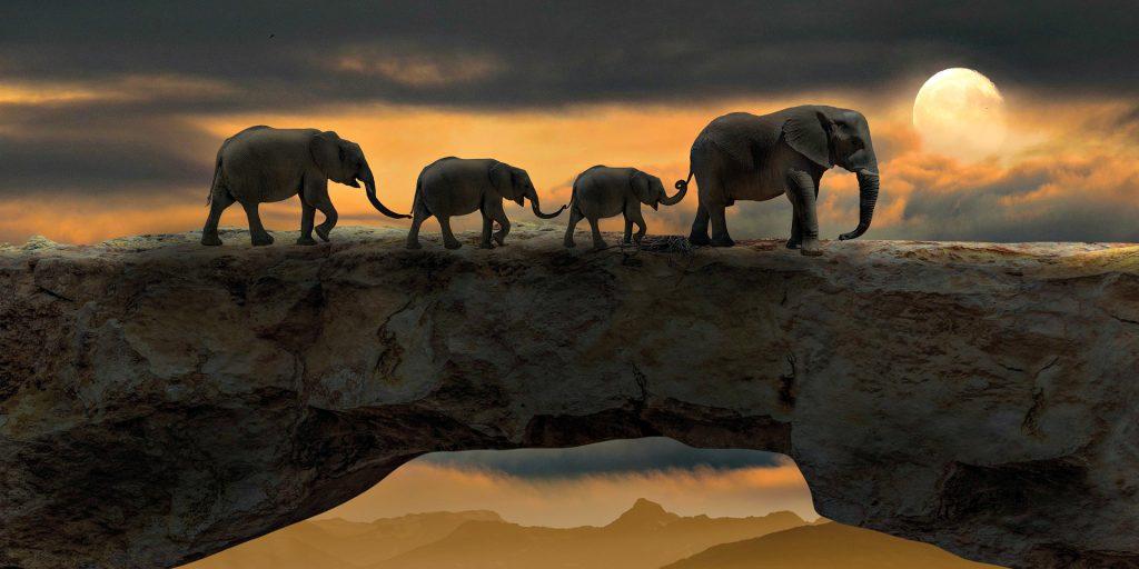 elephants walking and holding trunks