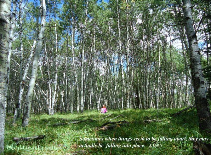 jennifer in birch forest meditating