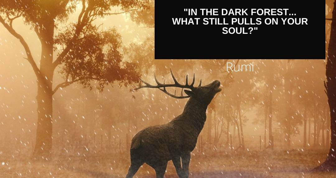 Moose calling in forest with Rumi quote about what still pulls your soul