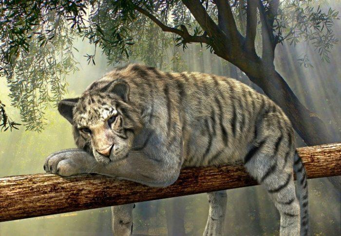 tired tiger on branch