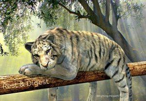 white tiger resting on branch