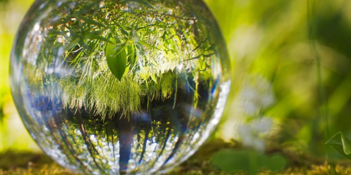 glass ball reflecting nature